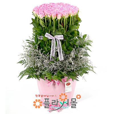 핑크빛 사랑 100송이 장미_ 대형분홍장미꽃바구니 발렌타인데이 꽃선물 플라워몰