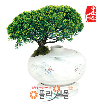 진백백자주판(중)(택배상품)