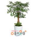 해피트리(행복나무.행복드림)