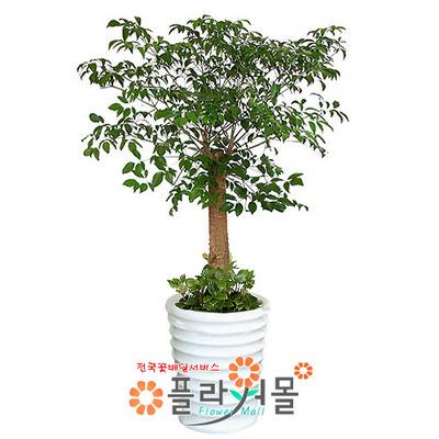 [당일수령]해피트리_행복나무_ 행복드림 개업나무 인테리어화분_ 전국화분배달[플라워몰]
