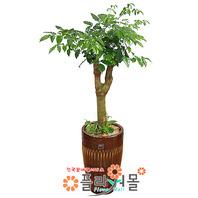 해피트리01(행복나무)