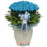 특별한 사랑 100송이 장미_ 파란장미꽃바구니 특별한 기념일 꽃선물 플라워몰