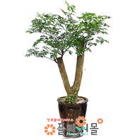 해피트리04(행복나무)