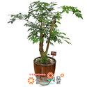해피트리05(행복나무)