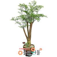 해피트리06(행복나무)