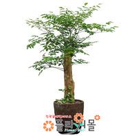 해피트리08(행복나무)