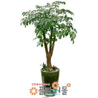 해피트리(특)(행복나무,행복하세요!)